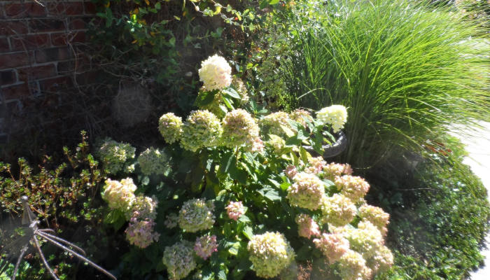 A sunny garden with an assortment of flowers and greenery.