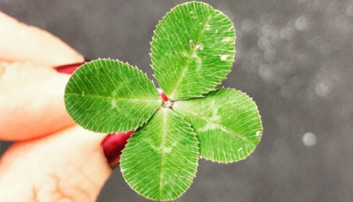 This St. Patricks' Day, it may take more than luck to find a health insurance plan